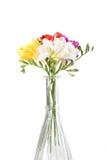 Bouquet vibrant de freesias d'isolement sur le fond blanc photos libres de droits