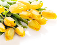 Bouquet of vibrant yellow tulips Royalty Free Stock Images