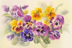 Bouquet of violas watercolor. Watercolor painting of purple flower. Can be used as a greeting card for background, birthday, mother`s day and textile patterns Stock Photography