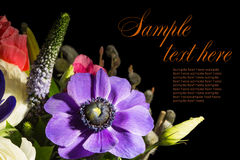 Bouquet of of violet  anemone and lisianthuses. Isolated on black Stock Image