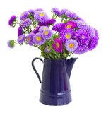 Bouquet of violet aster flowers Stock Photography