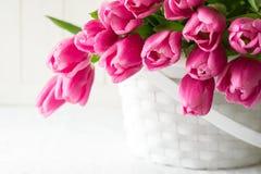Bouquet violet de tulipes dans le panier devant le mur en bois blanc Images libres de droits