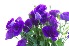 Bouquet  of  violet eustoma flowers Royalty Free Stock Photography