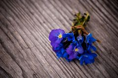 Bouquet of violet flowers Viola Odorata on a wooden background Stock Photos