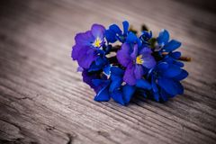Bouquet of violet flowers Viola Odorata on a wooden background Stock Photography