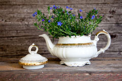 Bouquet of Violet Flowers in White Tea Pot. Bouquet of Small Violet Flowers in White Porcelain Tea Pot Decorated with Gold Details with Wooden Background Royalty Free Stock Photos