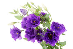 Bouquet of violet fresh flowers. Royalty Free Stock Photography