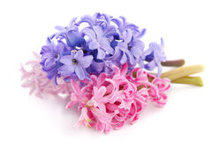 Bouquet violet hyacinth Royalty Free Stock Image