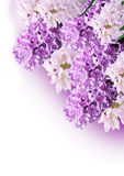 Bouquet violet hyacinth Royalty Free Stock Photography