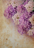 Bouquet violet hyacinth crunge Royalty Free Stock Photo