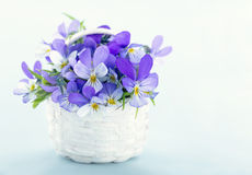Bouquet of violet pansies Royalty Free Stock Photo