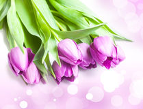 Bouquet of violet tulips. On bokeh background Royalty Free Stock Images