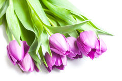 Bouquet of violet tulips. Isolated background Stock Images