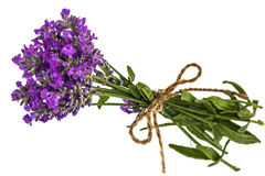 Bouquet of violet wild lavender flowers in dewdrops and tied wit Stock Images