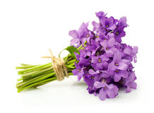 Bouquet of violets Stock Photography