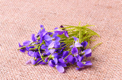 Bouquet of Violets Royalty Free Stock Image