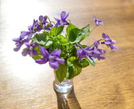 Bouquet of violets Stock Images