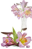 Bouquet voilet lily in vase Stock Image