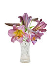 Bouquet voilet lily in vase Stock Photo