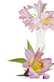 Bouquet voilet lily in vase Stock Photography