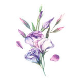 A bouquet of watercolor eustoma flower isolate on white backgrou Royalty Free Stock Images