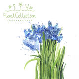 A bouquet of watercolor muscari Stock Image