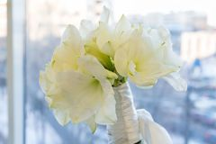 A bouquet of white Amarilis. Bridal, celebration and Birhtday concept. Background. stock photography