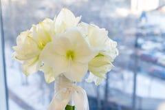 A bouquet of white Amarilis. Bridal, celebration and Birhtday concept. Background. stock images