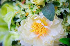 Bouquet with white big white flower and green leave. Close up bouquet with white big white flower and green leave royalty free stock photos