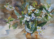 Bouquet of white blossom jasmine in a glass watercolor painting Stock Photo
