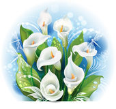 Bouquet of White Calla lilies Royalty Free Stock Images