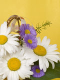 Bouquet with white camomiles Stock Image