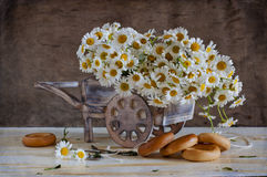 Bouquet of white chamomiles Royalty Free Stock Photos