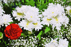 Bouquet of white chrysanthemums and carnations Stock Image