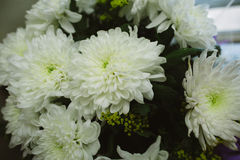 Bouquet of White Chrysanthemums on a Holiday Stock Photography