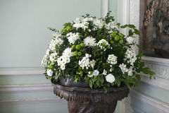 The bouquet of white chrysanthemums in interior Stock Photos