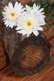 A bouquet of white chrysanthemums on a tree stump. Royalty Free Stock Photography