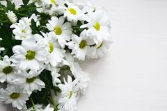 Bouquet of white chrysanthemums on white wood background Royalty Free Stock Photos
