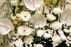 Bouquet of white colors Royalty Free Stock Photography