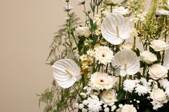 Bouquet of white colors Royalty Free Stock Photo