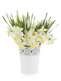 Bouquet of white daffodils in flowerpot Royalty Free Stock Photo