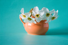 Bouquet of white daffodils in  orange vase. Spring Flower. Narci. Ssus on neutral background. Romantic gift Stock Photo