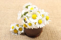 Bouquet of white daisies in ceramic vase on jute canvas Stock Photography