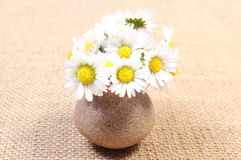 Bouquet of white daisies in ceramic vase on jute canvas Royalty Free Stock Photo