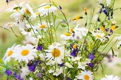 Bouquet of white daisies Stock Photos