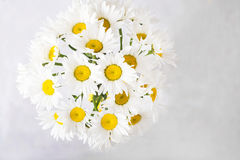Bouquet of white daisies on a light gray background. Still life with colorful flowers. Fresh daisies Place for text. Flower concep Royalty Free Stock Photography