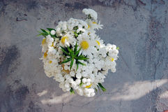 Bouquet of white daisies Royalty Free Stock Photography