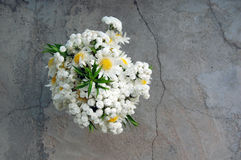 Bouquet of white daisies Royalty Free Stock Image