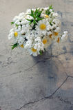 Bouquet of white daisies Stock Photography