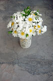 Bouquet of white daisies Stock Image